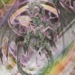 【遊戯王】ストラク「機械竜叛乱」の全収録カードリスト判明!新規・再録もまとめました【フラゲ】