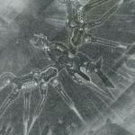 【遊戯王】《RR-レヴォリューション・ファルコン-エアレイド》新規判明・考察!【ザ・ヴァリュアブルブック19】