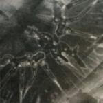 【遊戯王】「ザ・ヴァリュアブルブック19」付録カード《FNo.0 未来皇ホープ- フューチャー・スラッシュ》 《RR-レヴォリューション・ファルコン-エアレイド》