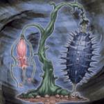 【遊戯王 高騰】《イービル・ソーン》値上がり!『リンク植物』デッキ活躍の影響!?【価格,買取相場】